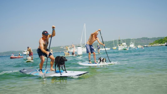every man and his dog stand up paddle 2019